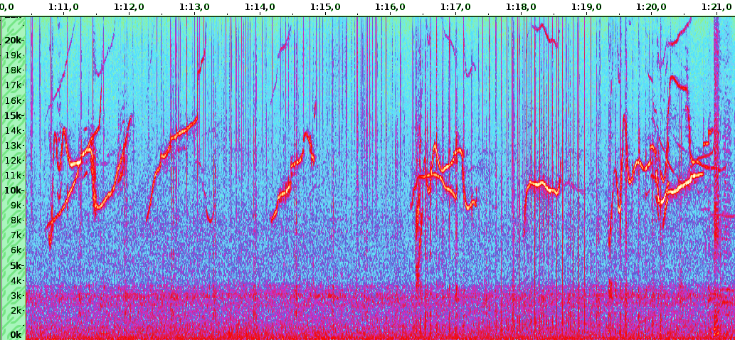 spectrogram of a recording sample of BOMBYX SABIOD, including crossing whistles from 2 dolphins, and clics from Physeter